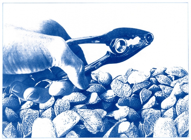 English Idioms: it's a Hard Nut to Crack (Cyanotype photocomposite)