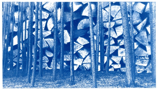 English Idioms: can't see the Wood from the Trees (Cyanotype photocomposite)